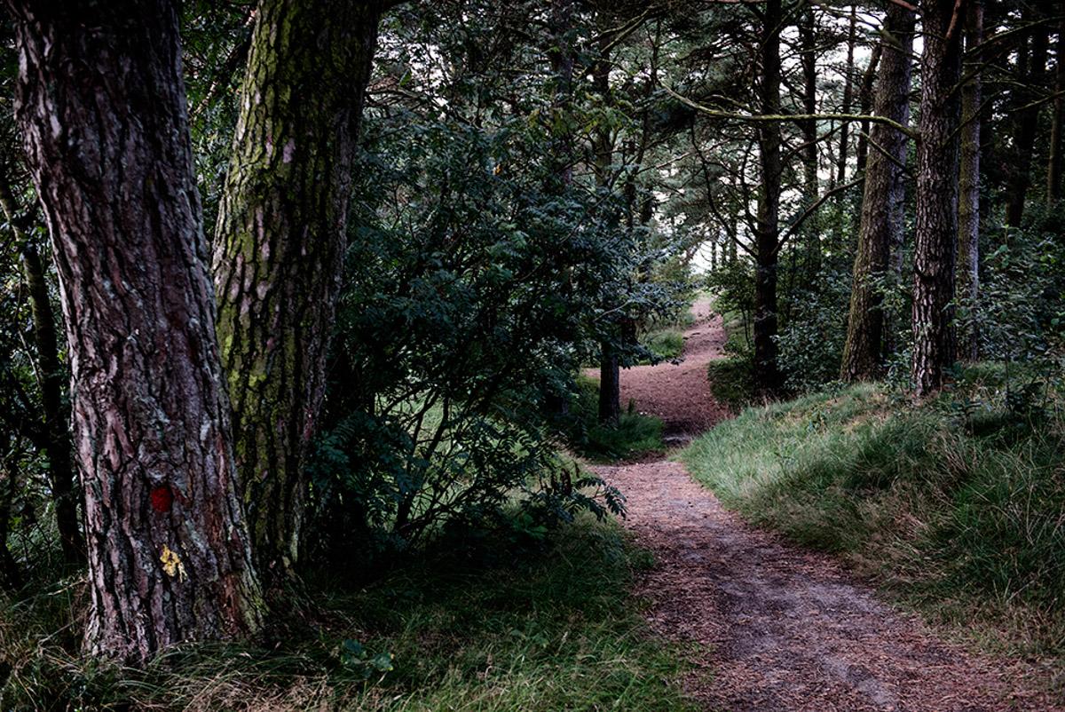 Grene Sande, skovsti